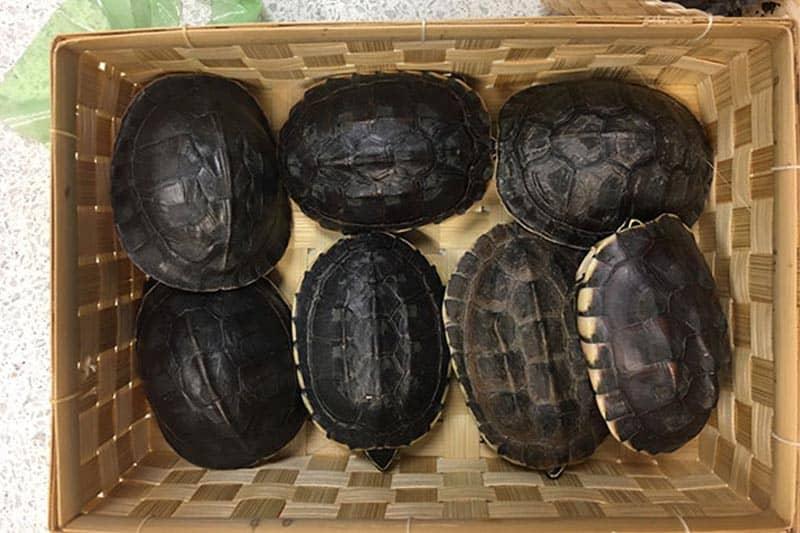 タイ・スワナンプーム空港で、日本人女性を野生生物の密輸容疑で逮捕