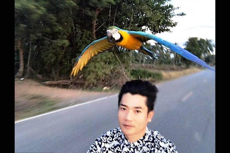 【衝撃映像】チェンライで、オウムとランデブー走行する地元バイカー