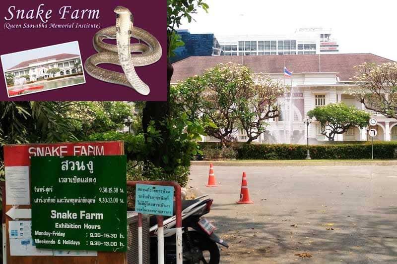 狂犬病のワクチン注射は、バンコクのスネークファームがオススメ