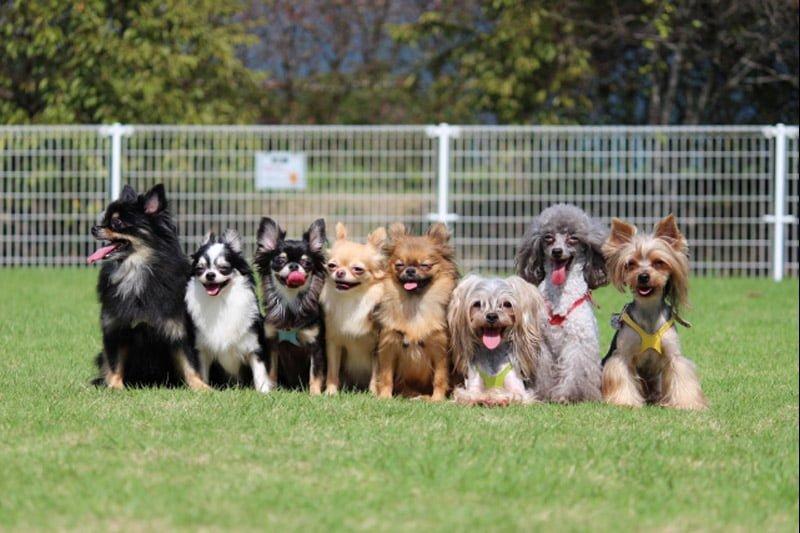 ペットからの狂犬病感染者と動物、今年2倍に