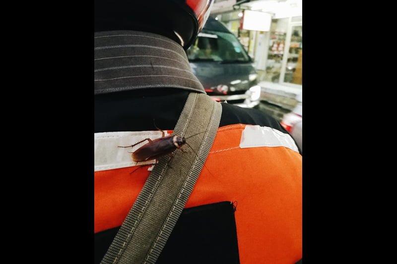 バイタク運転手の肩にゴキブリ、超接近遭遇にショックの女性!(タイ・バンコク発)