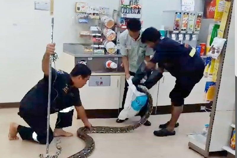 タイの7-11で、エアコンで涼む大蛇を発見!