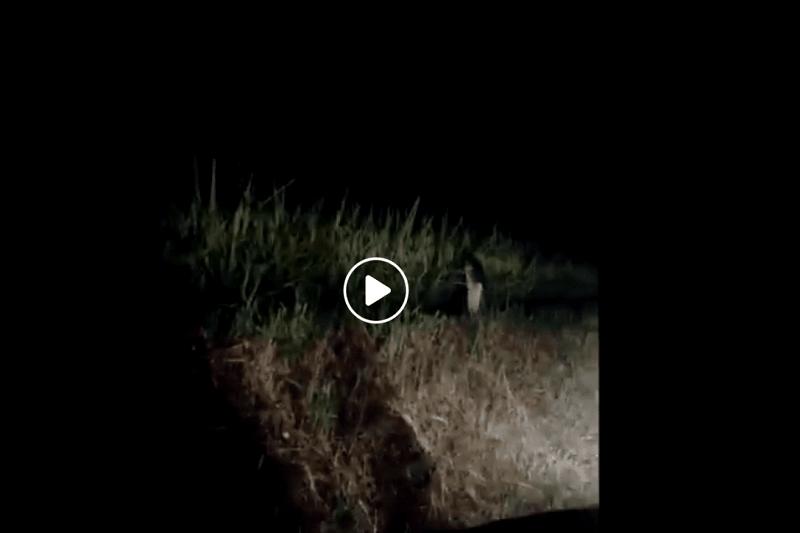 ラオスで撮られた幽霊動画がタイでも話題に!