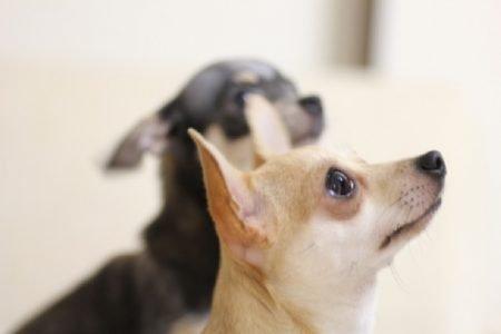 タイで起きた動物絡みの珍事件!犬がうるさいので隣人殺害