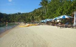 タイ観光業界の現況と今後(前篇)~34.7%の会社や店が倒産