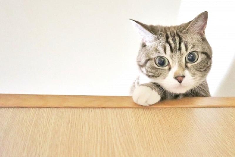 タイにいる世界で一番高齢の猫&ドラッグディーラーは何故高価な猫を飼っていた?