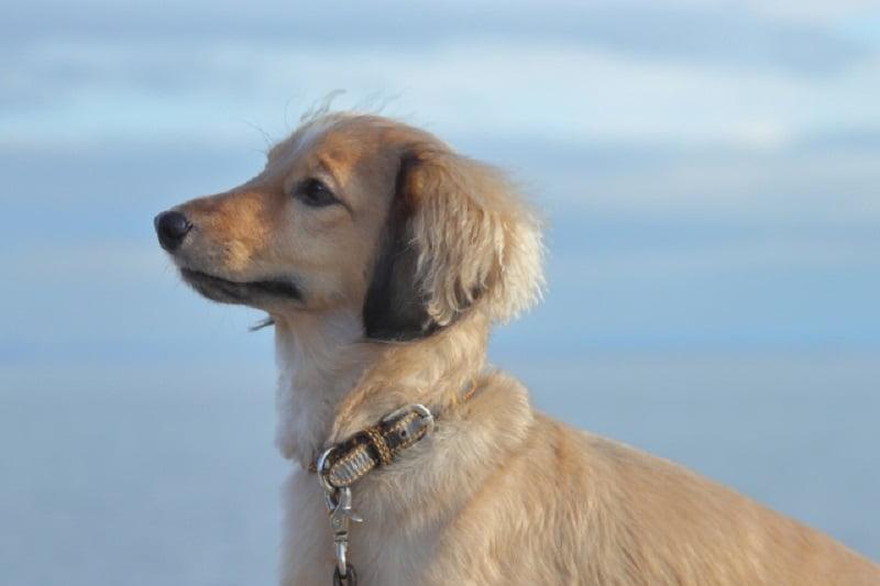 タイの犬たちが体験した「天国」と「地獄」