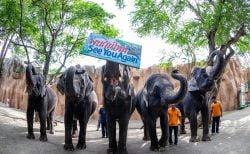コロナ禍で苦境に立つタイ各地の動物園